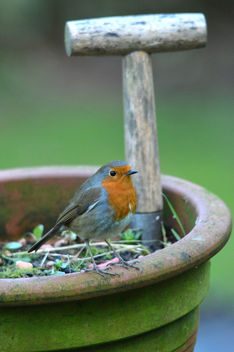 Flower Pot Robin - Free image #306711