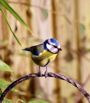 Blue Boy - image gratuit(e) #307121