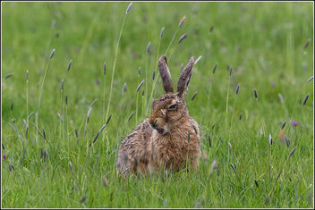 It's tiring being a hare... - Free image #307201