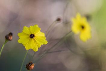 Flower. - Kostenloses image #307241