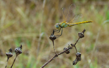 Dragonfly - Free image #307351