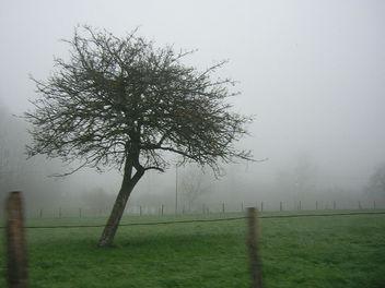 Misty - Free image #307731