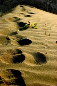 Sand - image gratuit #308021