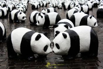 Panda kiss - image gratuit #308371