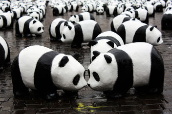 Panda kiss - Free image #308371
