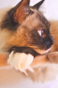 cat - image #308841 gratis