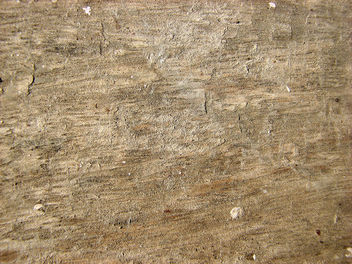 Wood Texture - Free image #310771