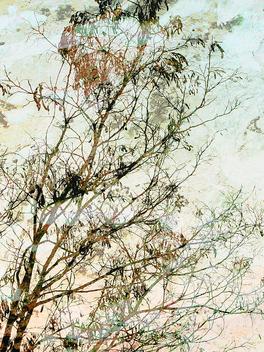 Dreaming Tree - Kostenloses image #310961