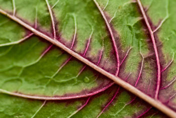 Red Spinach - image #312551 gratis