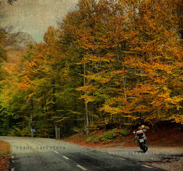 Moto. Road. Forest. Fall. (part II) (I wish I was in Vermont or in New Hampshire) - Free image #313561