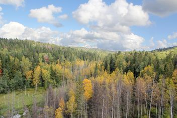 autumn forest bird eye view - Free image #317421