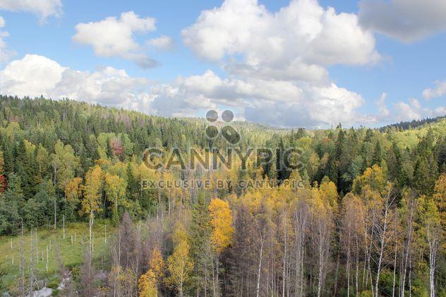 autumn forest bird eye view - Free image #317421