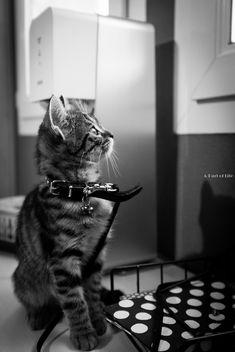 Mu's Cat - Free image #320831