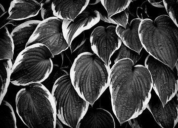 in pattern - image gratuit #321041