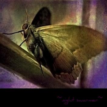 ~night swarmer~ - image gratuit #322331