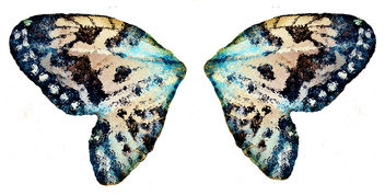 A Pair of Butterfly Wings - Free image #322871