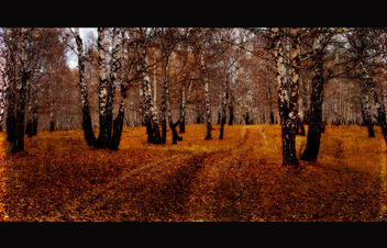 Autumn Landscape - Kostenloses image #323561