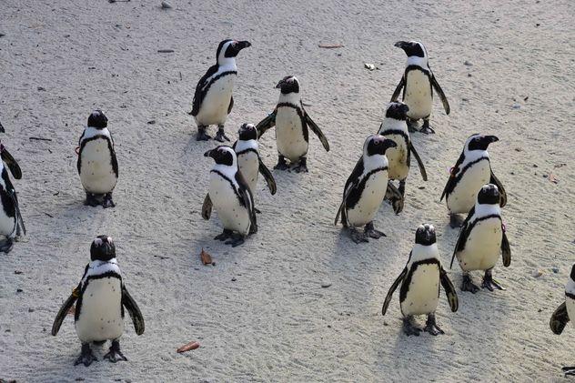 Group of penguins - image gratuit #328451