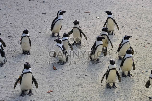 Group of penguins - image gratuit #328451