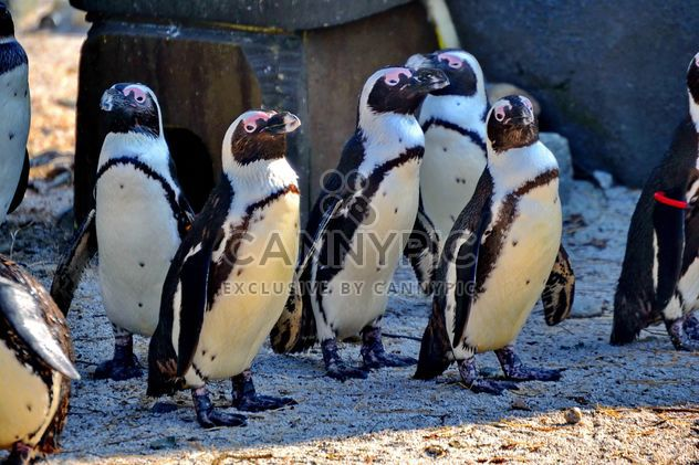 Group of penguins - Free image #328501