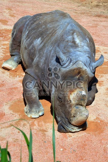 Rhino resting lying on the ground - Free image #328541