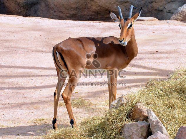 antilope dans le parc - Free image #328631