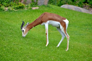 antelope in the park - image gratuit #328641
