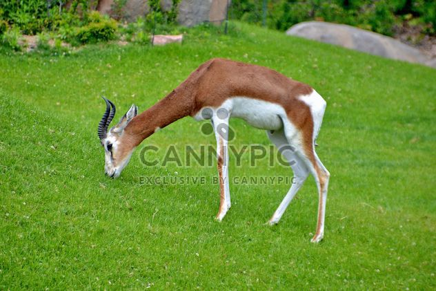 antelope in the park - Free image #328641
