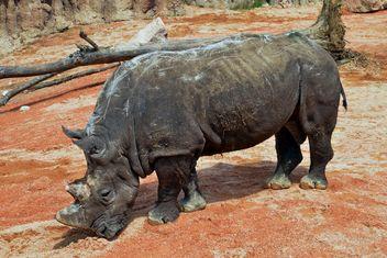 Rhinoceros in park - Free image #329061