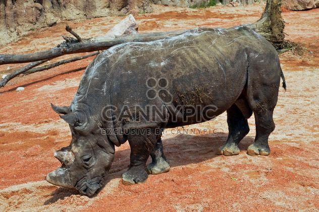 Rinoceronte no parque - Free image #329061