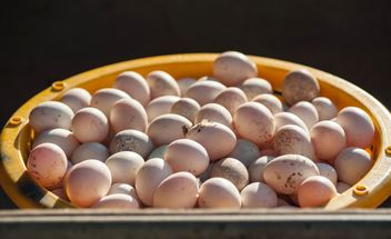 Duck eggs in yellow buckets - image #329661 gratis