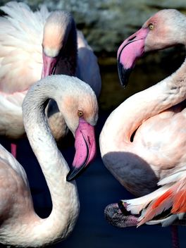 pink flamingos in park - бесплатный image #329881