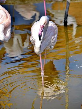 pink flamingo in park - бесплатный image #329891
