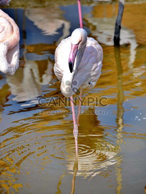 Розовый Фламинго в парке - бесплатный image #329891