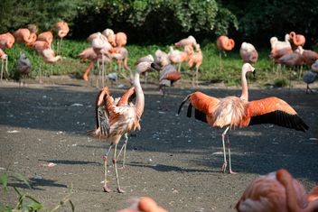 Flamingos in park - image gratuit(e) #329921