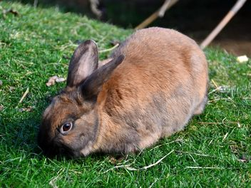 rabbits on a grass in a park - image gratuit #330281