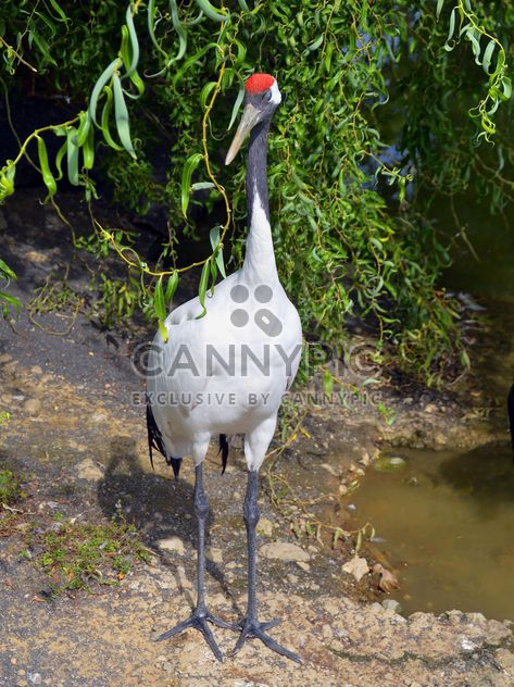 Crane in pond in a park - image gratuit #330291