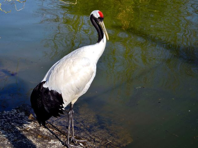 Crane in pond in a park - Free image #330301