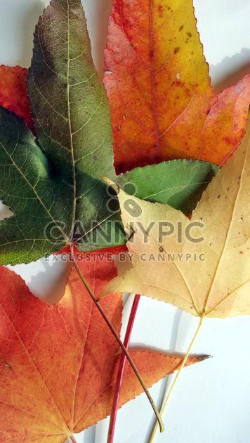 Autumn foliage - Free image #330951
