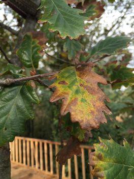 Autumn foliage - Kostenloses image #330981