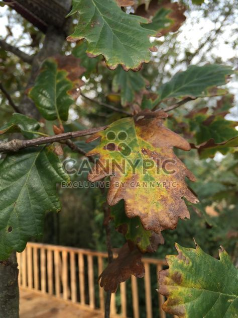 Autumn foliage - Free image #330981
