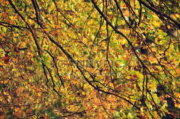 Autumn foliage - Free image #331011