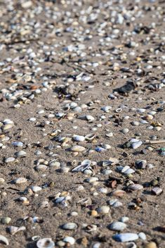 seashells on a sandy beach - image #332861 gratis