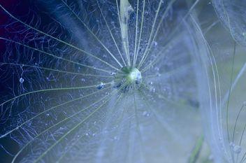 Dandelion macro - Free image #333301