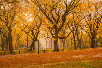 Fall 2015 in Central Park - image #334151 gratis