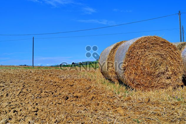 Haystacks, rolled into a cylinders - image #334741 gratis