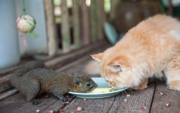 Cat and squirrel eat from one plate - image gratuit #335031
