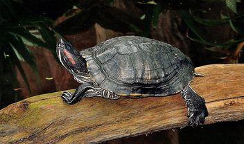 One Tortoise - Free image #335081
