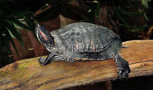 One Tortoise - бесплатный image #335081