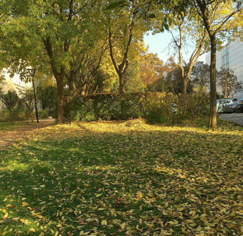 Turkey (Istanbul) Autumn foliage - бесплатный image #335171